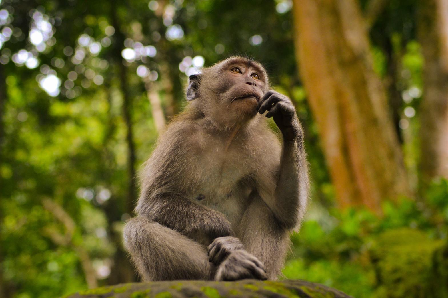 una scimmia con espressione pensosa